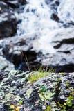 Cascade de montagne dans les roches Photographie stock libre de droits
