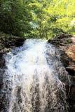 Cascade de montagne située dans une forêt en été photos libres de droits