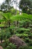 Cascade de Namtok Siriphum Sirithan à l'AMI Thaïlande de Mae Ya Doi Inthanon Chiang Photo stock