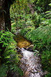 Cascade de Namtok Siriphum Sirithan à l'AMI Thaïlande de Mae Ya Doi Inthanon Chiang Photos stock
