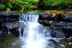Cascade de région boisée Image libre de droits