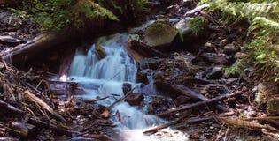 Cascade de région boisée Photo libre de droits