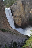 Cascade de Yellowstone Image stock