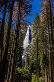 Cascade de Yosemite photos stock