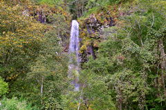 Cascade dichtbij Morelia II Stock Foto's