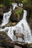 Cascade en montagnes d'Altai image libre de droits