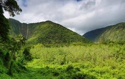 Cascade en vallée de Waipio Image libre de droits