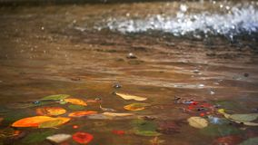 Cascade et Autumn Leaves sur l'eau de lac clips vidéos