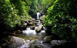 Cascade et cascades dans la forêt verte Photos stock