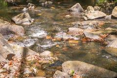 Cascade et courant dans la forêt dans Itacare Photo libre de droits