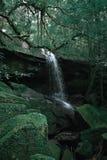 Cascade et forêt fraîche dans la saison d'été photographie stock libre de droits