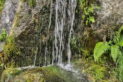 Cascade et fougère fraîches de jungle d'arbre photos libres de droits