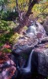 Cascade et vieux bouleau Image libre de droits