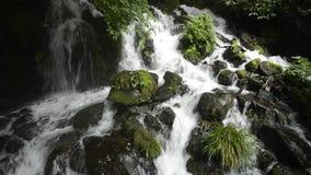 Cascade falling among stones. White cascade falling among green mossy stones in Kagoshima stock video