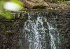 Cascade falls in forest Stock Image