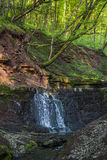 Cascade falls in forest Stock Photography