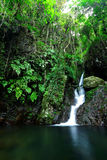 Cascade in forest Royalty Free Stock Images