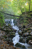 Cascade in Forest. Cascade at Yedigoller (Seven Lakes) National Park in Bolu, Turkey Royalty Free Stock Photos