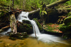 Cascade in the forest. Crystal clear water rushing through the alluvial tribes Stock Photos