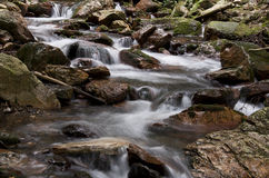 Cascade Forest Stream Royalty Free Stock Photography