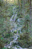 The cascade Stock Image