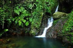 Cascade in forest Royalty Free Stock Photo