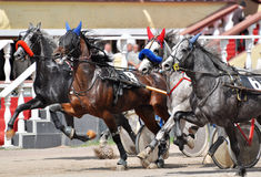 Cascade of four trotters on the move on racetrack Royalty Free Stock Photo