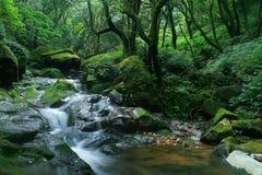 Cascade fraîche verte Photos libres de droits