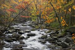 Cascade in Little Pigeon River in the Autumn. Cascades in the middle prong of the Little Pigeon River at Great Smoky Mountains National Park, TN USA royalty free stock photography