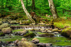Cascade on the little stream with stones in forest Stock Image