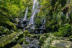 Cascade magnifique dans la jungle photo stock