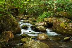 Cascade with mossy rocks in forest Stock Images