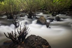 Flowing Nang Rong waterfall to forest. Cascade motion water to mangrove forest of Nang Rong Waterfall in Nakhon Nayok, Thailand. Nature abstract background and Stock Image
