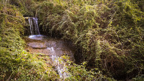 Cascade of a mountain stream in the vegetation. Royalty Free Stock Photography