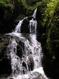 Cascade naturelle et sauvage