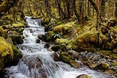 Cascade, Nelson Lakes National Park, New Zealand royalty free stock photography