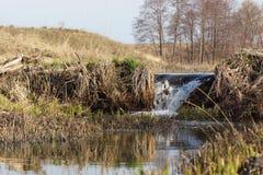 Cascade par un barrage de castor Images libres de droits