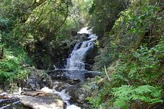 Cascade, parc national de Tsitsikamma, itinéraire de jardin, nr Knysna, Afrique du Sud photographie stock
