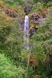 Cascade près de Morelia III Photo libre de droits