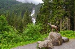 Cascade puissante dans la forêt photos libres de droits