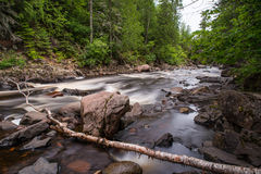 Cascade River with Fallen Tree Branch. This is part of Cascade River State Park in Minnesota Royalty Free Stock Images