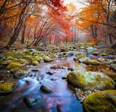 Cascade river in a forest stock photo