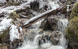 Cascade river in forest Stock Images