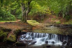 Cascade River in the forest Stock Photography