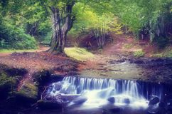 Cascade River in the forest Royalty Free Stock Image