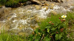 Cascade on small mountain stream in Alps, water is running over stones in green meadow Royalty Free Stock Images