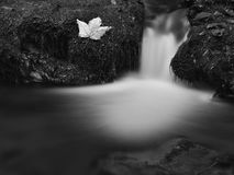 Cascade on small mountain stream, water is running between boulders and bubbles create milky level. Stock Photography