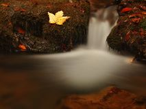 Cascade on small mountain stream, water is running between boulders and bubbles create milky level. Stock Images
