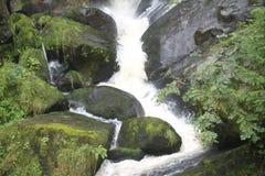 Cascade stream scenic Black Forest. Beautiful green scenery Royalty Free Stock Photos