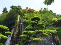 Cascade sur l'arbre photo libre de droits